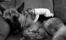 Собаке всё равно, бедный ты или богатый, образованный или не грамотный, умный или тугодум.