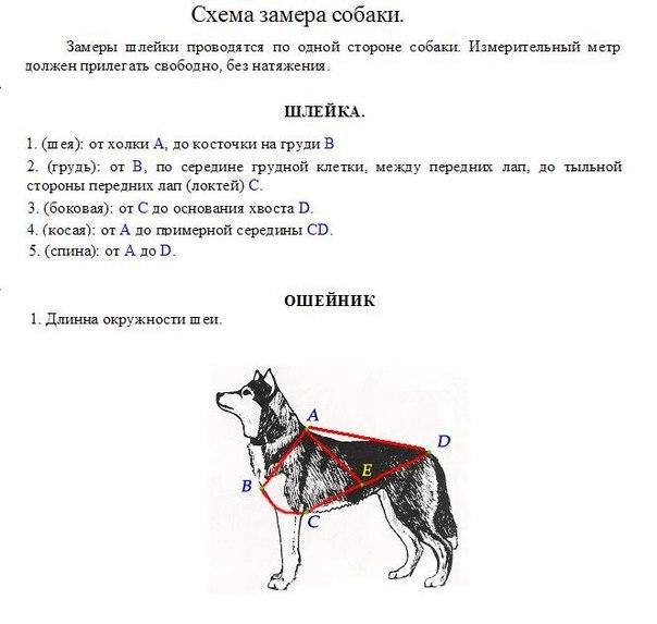 Схема замера собаки