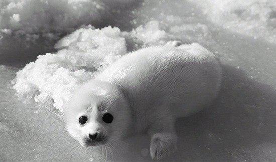 7 видов животных, которых мы можем потерять в ближайшее время «благодаря» человечеству