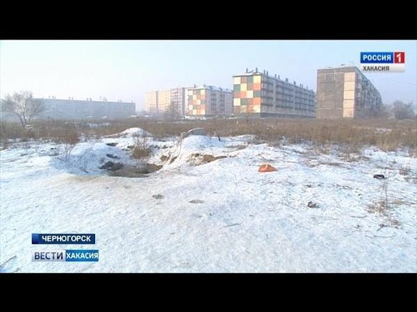 В Черногорске начался отлов собак. 23.01.2019