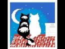 Белый и чёрный коты