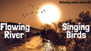 Meditative River Streaming Sounds With Singing Birds | Nature Sounds For Relaxation, Reading & Yoga