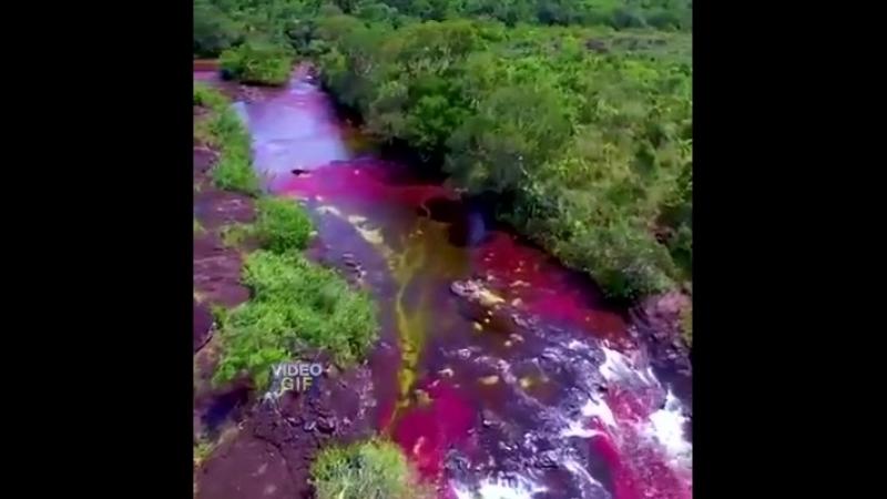 Радужная река в Колумбии - одна из самых красивых рек в мире.