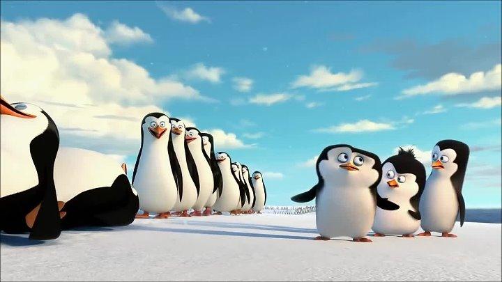 Paul Mauriat - Alouette Кадры из мультфильма Пингвины Мадагаскара