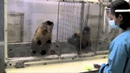 Two Monkeys Were Paid Unequally Excerpt from Frans de Waal's TED Talk