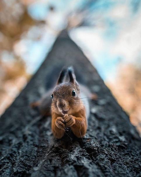 Талантливый финский фотограф и ретушер Йоахим Мунтер обожает исследовать дикую природу.