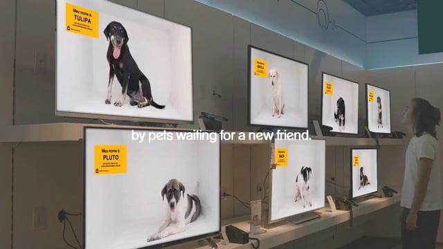 Pedigree dog channel