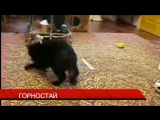 Горностай)