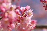 Музее естественных наук. особенно живописен во время цветения сакуры и является традиционным...