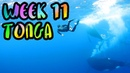 Swimming with Humpback Whales in Tonga BEST MOMENT EVER WEEK 11 Vava'u Tonga