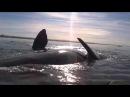 Огромный кит покатал на спине каяк с двумя гребцами