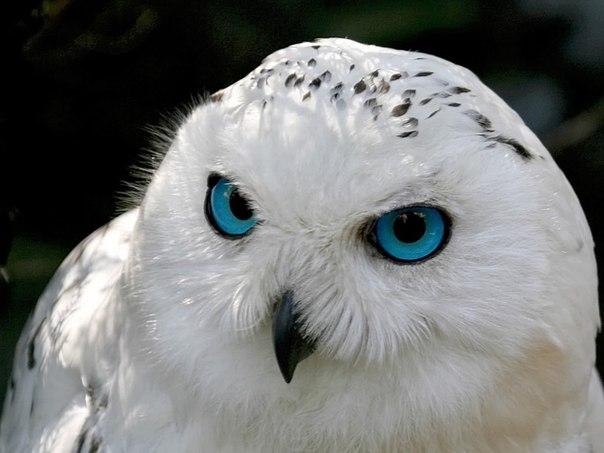 изображение совы: