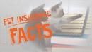 Всё о страховании домашних животных / All About Pet Insurance