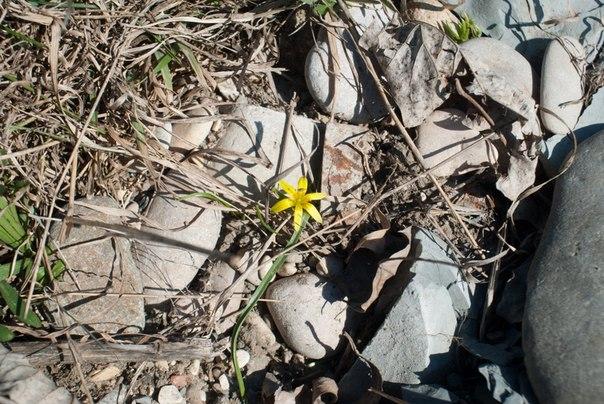 первые цветы сквозь палые листья