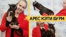 Бурманский кот соболиного окраса Арес Кэти Бурм