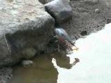 Умная птичка нашла способ, как приманить рыбу ближе к берегу