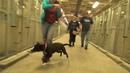 Питбули и чихи - самые несчкастные собаки в мире. Реакция собаки когда она поняла, что ее приютят