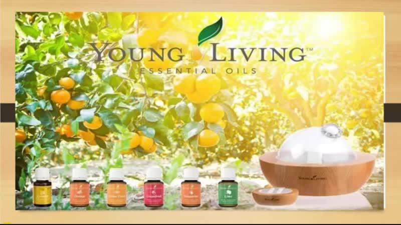 Young Living производство и качество эфирных масел