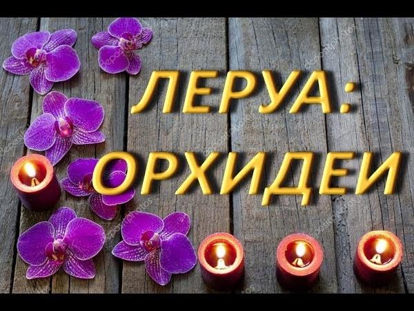 ЛЕРУА ОРХИДЕИ,23.02.2019,ТЦ Космопорт,г.Самара