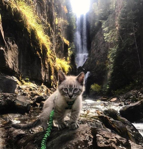Эти кот с собакой любят путешествовать вместе