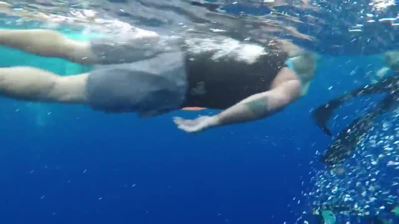 Дайверы встретили гигантскую белую акулу 6 sec