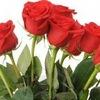 Букеты КВИБО Цветы Флористика Подарки Композиции