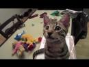тест кота Тиграна на психику, кто заржет тот псих