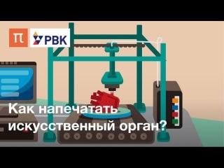 Как напечатать орган на биопринтере? rfr yfgtxfnfnm jhufy yf ,bjghbyntht?
