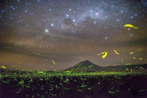 Карнавал светлячков и звездное небо над озером Натрон в Танзании
