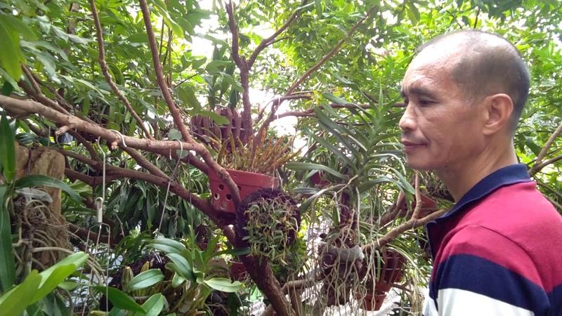 Vườn lan rừng đặc biệt của Chú Siêu Mỹ độ thành phố Bắc Giang