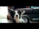 Стихотворение из кинофильма Ёлки 3. Валентин Гафт - От чего так предан пёс...