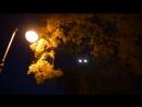 Ночь на Кладбище СТРАШНЫЕ ИСТОРИИ НА НОЧЬ - ДОЛГАЯ НОЧЬ Часть 1 - ТОП СТРАШИЛКИ