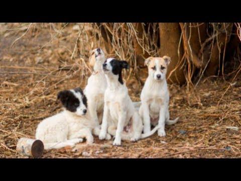 Эти четыре пса защищали в лесу маленькое чудо