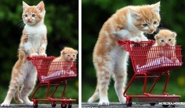 Заботливая мама-кошка