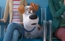 Видео к мультфильму «Тайная жизнь домашних животных2» (2019): Персонажный трейлер «Max» (дублированный)