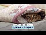 Похитители одеял и сердец