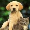 ✔ Домики для котов и собак (своими руками)✔
