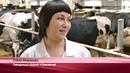 Молочная роботизированная ферма ЗАО «Агрофирмы «Мясо»