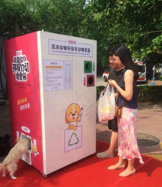 Автомат раздает еду бездомным животным в Китае. Чтобы высыпа