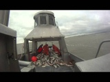 Трудовая рыбалка!) Salmon,Bristol Bay,Commercial Fishing, Alaska