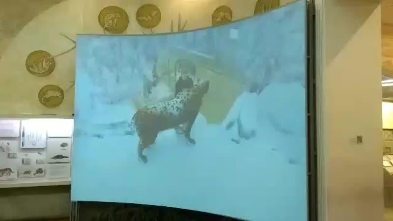 виртуальный саблезубый тигр