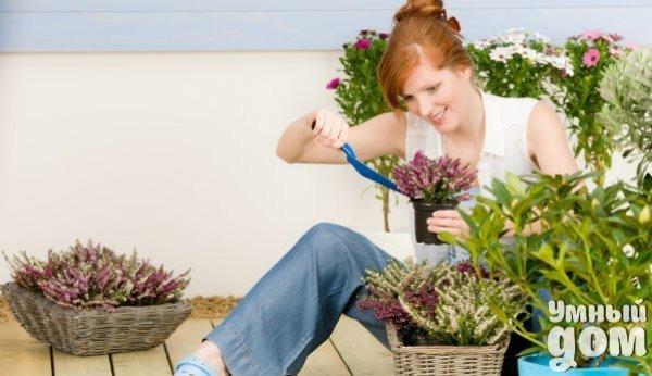 Рецепты по защите цветов и овощей от вредителей. 2 столовые ложки горчицы развести в литре воды (90 градусов), охладить, процедить, залить в распылитель. Обрызгивать садовые растения после захода Солнца каждые две недели. Если добавить сюда же 2 столовые ложки острого перца-получится раствор для капусты, проверено - помогает. Крапива может быть нашим союзником в борьбе с тлей, помимо того, что она - отличное удобрение, нет необходимости покупать химические вещества. Рецепт : 100 грамм на литр…