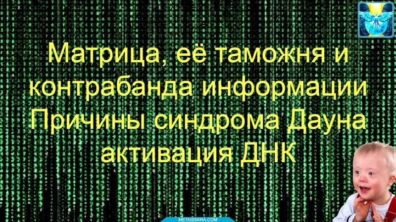 Матрица её таможня и контрабанда информации Причины синдрома Дауна активация ДНК