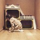 Анастасия Кручинина фото #13