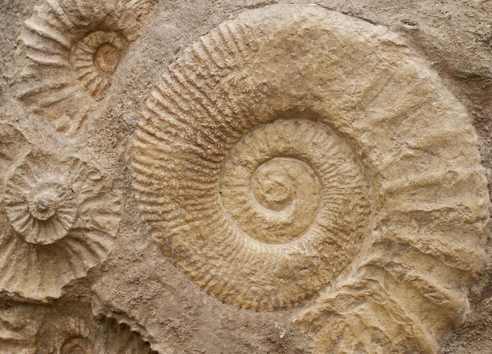 Магнитно-резонансная томография была использована для изучения окаменелостей и артефактов.