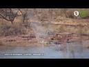 Охота на крокодила. оз.Кариба. Зимбабве
