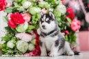 Самый лучший день в моей жизни был тогда, когда в мое сердце пришла любовь к собакам…