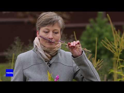 Советы по планировке цветника от Татьяны Койсман   ВокругДома