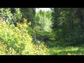 Коп с металлоискателем на старой лесной дороге.