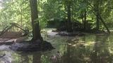 Очистка каскада прудов на реке Чернавка в г. Раменское